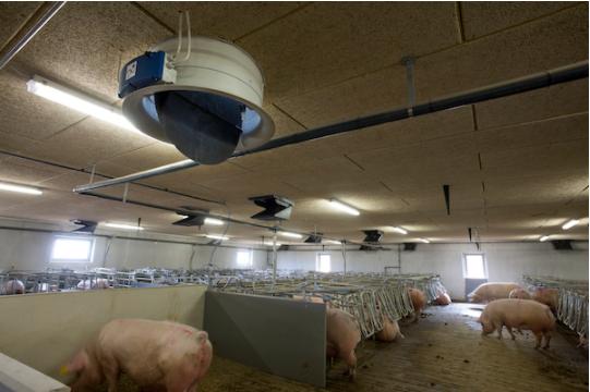 Важливість використання автоматичних систем вентиляції в сучасному свинарстві