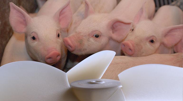 вытяжка с низким энергопотреблением для свинофермы